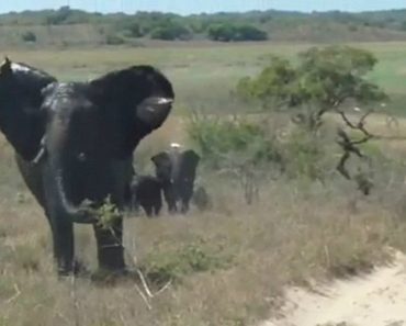 Heart-Stopping Moment Angry Elephant Attacks And Flips Car 4