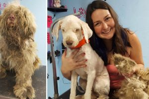 Groomer Spends Hours Shaving Neglected Dog in Need of Emergency Haircut 12