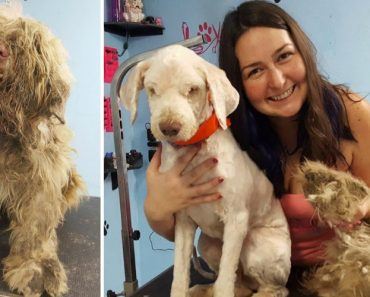 Groomer Spends Hours Shaving Neglected Dog in Need of Emergency Haircut 6