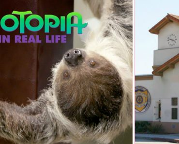 Disney Brings Sloths To The DMV To Recreate Irl Zootopia 6