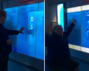 """Man Scared By """"Shark"""" In Washington Museum 2"""