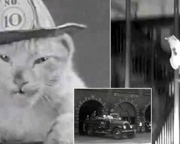 The First Cat Video? 1936 Film Introduces Mickey The Fire Cat 4