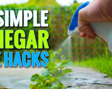 10 Simple Vinegar Life Hacks To Try At Home 7