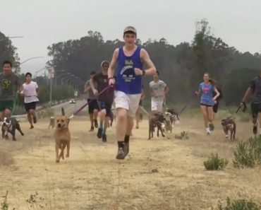 This High School Cross-Country Team Takes Lonely Shelter Dogs On Their Morning Runs 8