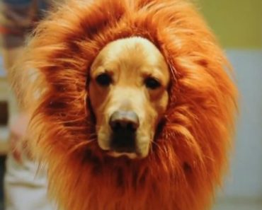 This Man's Hilarious Parody of The Amazon Lion-Dog ad Proves That Iife Is Never Like TV 7