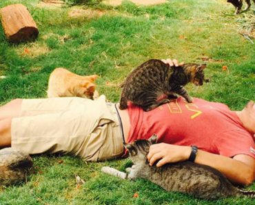 People Come from Around the World to Cuddle 500 Rescue Cats at Kitty Sanctuary 4