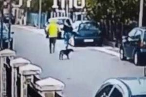 Street Dog Saves Woman From Being Robbed 12