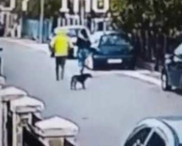 Street Dog Saves Woman From Being Robbed 6