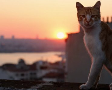 Ordinary Cats Live Extraordinary Lives In Istanbul 3