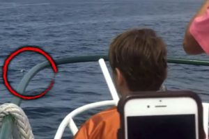 Quick-Thinking Captain Rescues Little Dog Who Fell Off Ferry 12