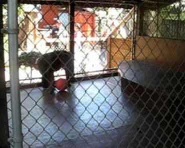 Monkey Entertains Zoo Visitors With A Dance Before Flinging Poo At Them 6