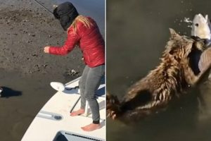 Woman Wrestles With A Raccoon In Shallow Water After It Tried To Steal A Fish From Her Line 10