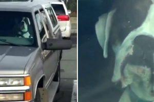 This Dog Who Had Enough Of Being Waiting In The Car Is Going Viral 12