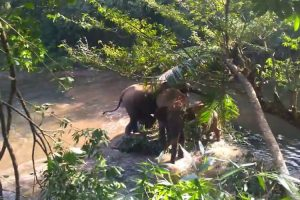 A Relieved Elephant Raises Her Trunk To Thank The Workers Who Rescued Her Baby From A Mud Hole 11