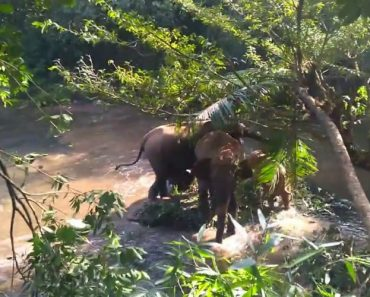 A Relieved Elephant Raises Her Trunk To Thank The Workers Who Rescued Her Baby From A Mud Hole 4