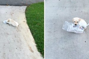 Adorable Puppy Struggles To Carry Newspaper 12