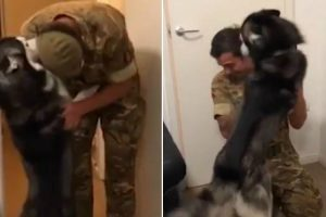 Loving Husky Can't Stop Kissing Military Owner Returning Home From Training 10