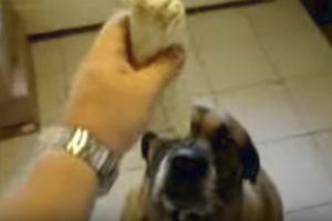 Dog Eats Bean Burrito In 1 Second! 10