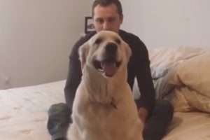 This Is The Most Trusting Dog In The World, And He'll Do Trust Falls To Prove It 12
