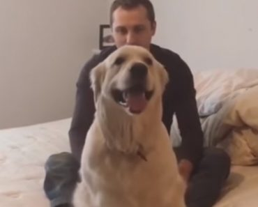 This Is The Most Trusting Dog In The World, And He'll Do Trust Falls To Prove It 6