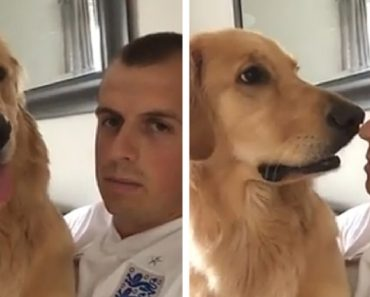You Have To See This Golden Retriever Sweet Reaction To Finding Out He's Getting A Baby Brother 8
