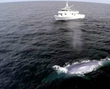 Blue Whale Proves TV Host Wrong 1