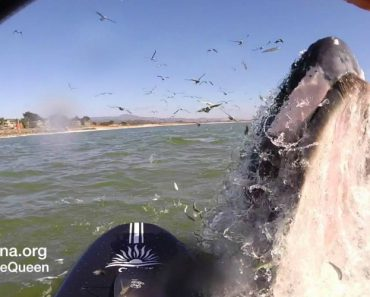 She Thought She Was Going To Relax On The Water, But One Whale Had Other Plans 7