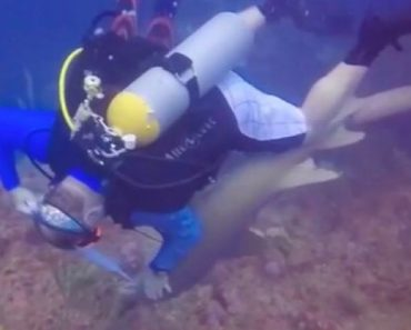 Diver Gets In Fight With Shark After Cheeky Predator Tries To Steal The Fish He Caught For Dinner 3