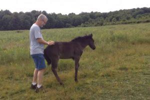 Baby Horse Demands Butt Scratches 12