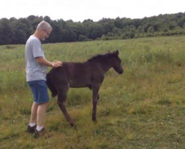 Baby Horse Demands Butt Scratches 7
