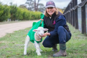 Disabled Lamb Learns To Walk Thanks To The Unlikeliest Object... A Shopping Bag! 11