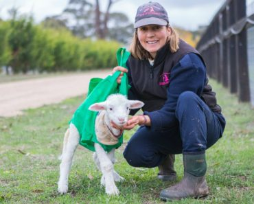 Disabled Lamb Learns To Walk Thanks To The Unlikeliest Object... A Shopping Bag! 8