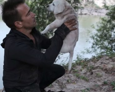 This Beautiful Short Story Puts Into Words How A Thankful Rescue Dog Really Feels 1