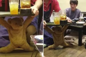 An Ambitious Teddy Bear Tries To Deliver Drinks But Goes Down Screaming Under The Weight Of The Tray 11