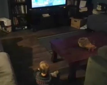 Baby Drops Everything And Crawls For The TV As Soon As Jeopardy Theme Starts 9
