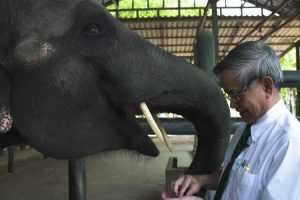 Doctor Creates Prosthetic Leg For Elephants. 15 Years Later His First Patient Is Still Grateful 11