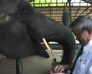 Doctor Creates Prosthetic Leg For Elephants. 15 Years Later His First Patient Is Still Grateful 3