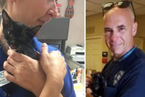 Firefighter Saves An Abandoned Kitten That Was Shockingly Thrown From A Moving Car 10