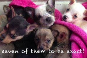 Heartbroken Mama Dog Has An Incredible Reunion With Her Adorable Puppies 11