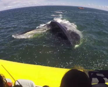 Huge Finback Whale Surfaces Right Near Canadian Tourism Boat 3