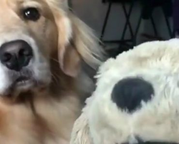Jealous Dog Goes Viral After Finally Losing It With Owner's Repeated Petting Of Fake Dog 9
