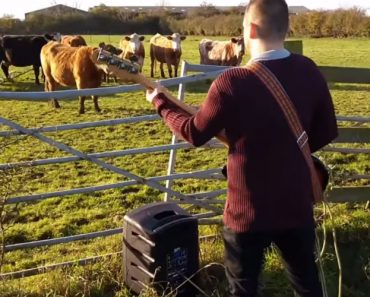 Musician Serenades His Cows With An Impressive Slap Bass Solo That Makes Them Run Away 5