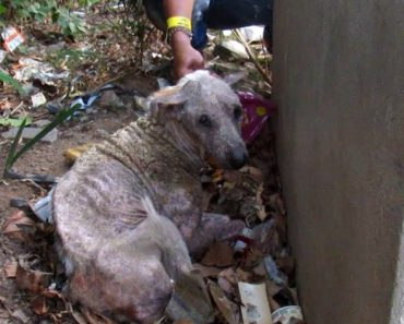 Street Dog With Horrible Skin Disease Get The Second Chance He Deserves 2