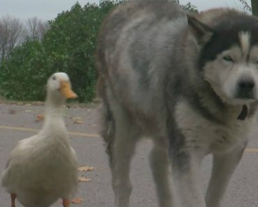 The Unlikely Friendship Of Max And Quackers 5
