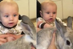 Watch This Baby Totally Freak Out With Excitement The First Time He He Sees A Rabbit 12