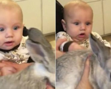 Watch This Baby Totally Freak Out With Excitement The First Time He He Sees A Rabbit 7