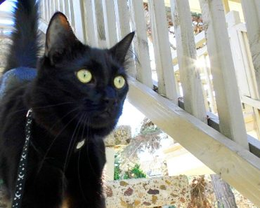 Interesting Facts About Black Cats That You Probably Don't Know 8