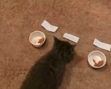 Undecided Roommates Let Their New Kitten Choose A Name For Himself With Games Involving Food 2