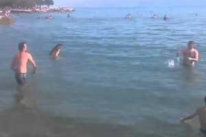 These Beachgoers Are Laughably Bad at Frisbee 11