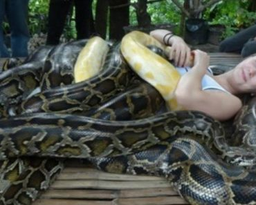 Brave Tourists Can Try The Snake Massage To Relieve Muscle Pains At This Zoo 1